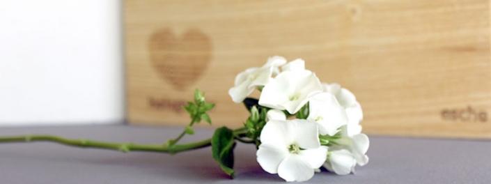Esche und Beton und Blume