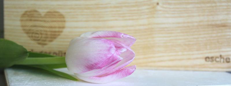 Esche und Tulpe