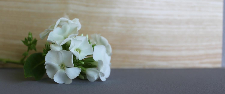 Esche und Blume